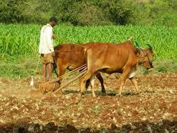 farmer_2